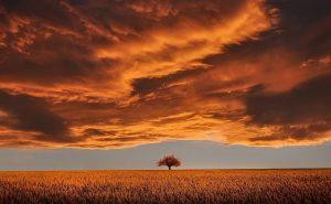 cremation services in or near North Battleford, SK